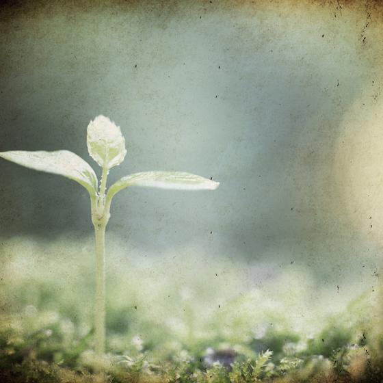 >小さな とても小さな 萌芽に気付くそんな優しいふたりが育む日々
