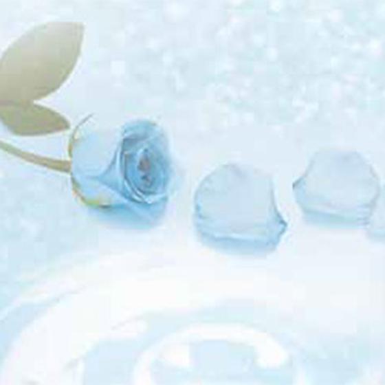 >誰にも見ることができなかった 青いバラ ブルーローズには『奇跡』という花言葉があります。