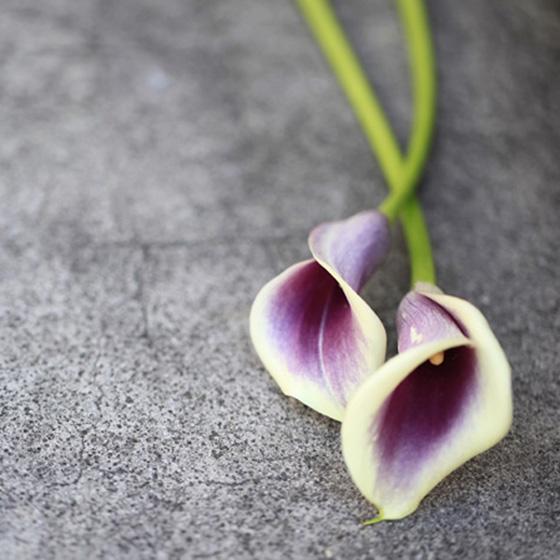>【結婚指輪デザインコンセプト】 植物のカラーにインスピレーションを得て、花びらに包み込まれるような優しい佇まいをイメージした指輪です。