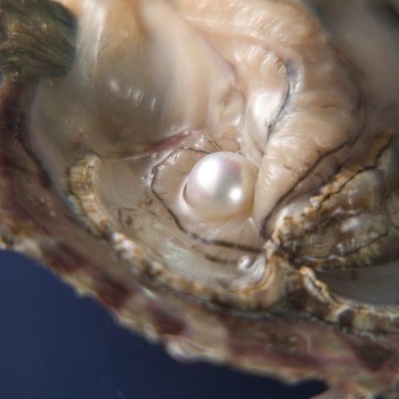 松本真珠のナチュラルパールは真珠本来の美しさにこだわり抜いて育んだ結晶です。